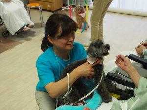 トイ・プードル犬のポワロちゃんの写真