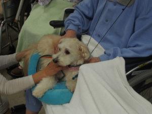 C病棟ふれあい、MIX犬のハイサイ君