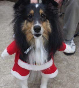 サンタになったメイちゃん