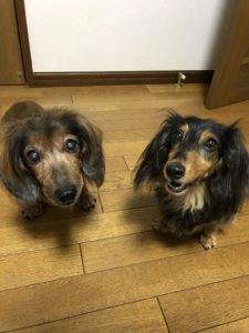ビーちゃん(左)とボーちゃん(右)